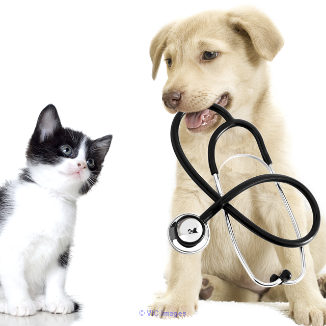 Veterinary Care Center Calgary, Alberta, Canada Classifieds