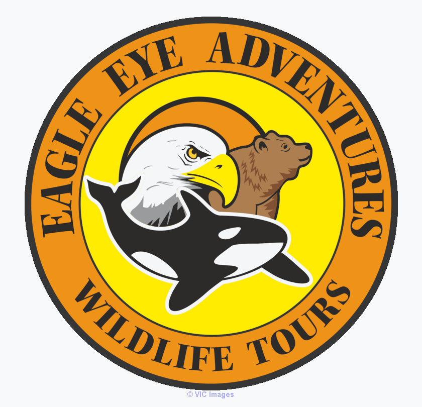 Grizzly Bear Tours Vancouver Island | Wildlife Adventure Tours calgary