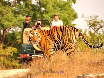 Tour Packages in India calgary