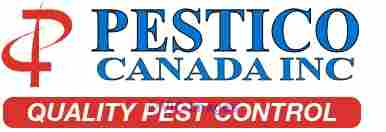Safeguard Your Property from Nuisance Squirrel with Best Pest Control calgary