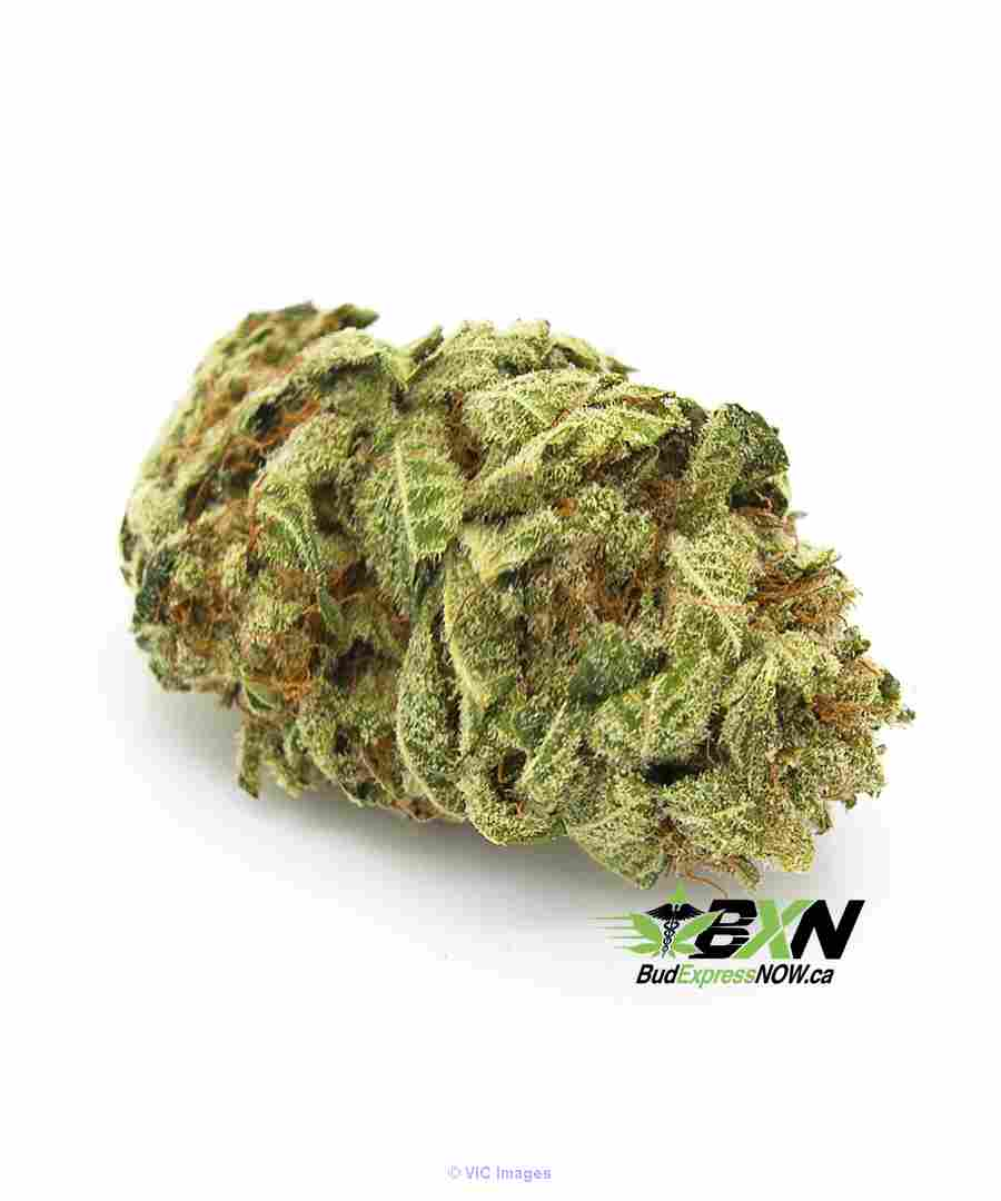 buy best quality medical products (violator) from weedmaps calgary