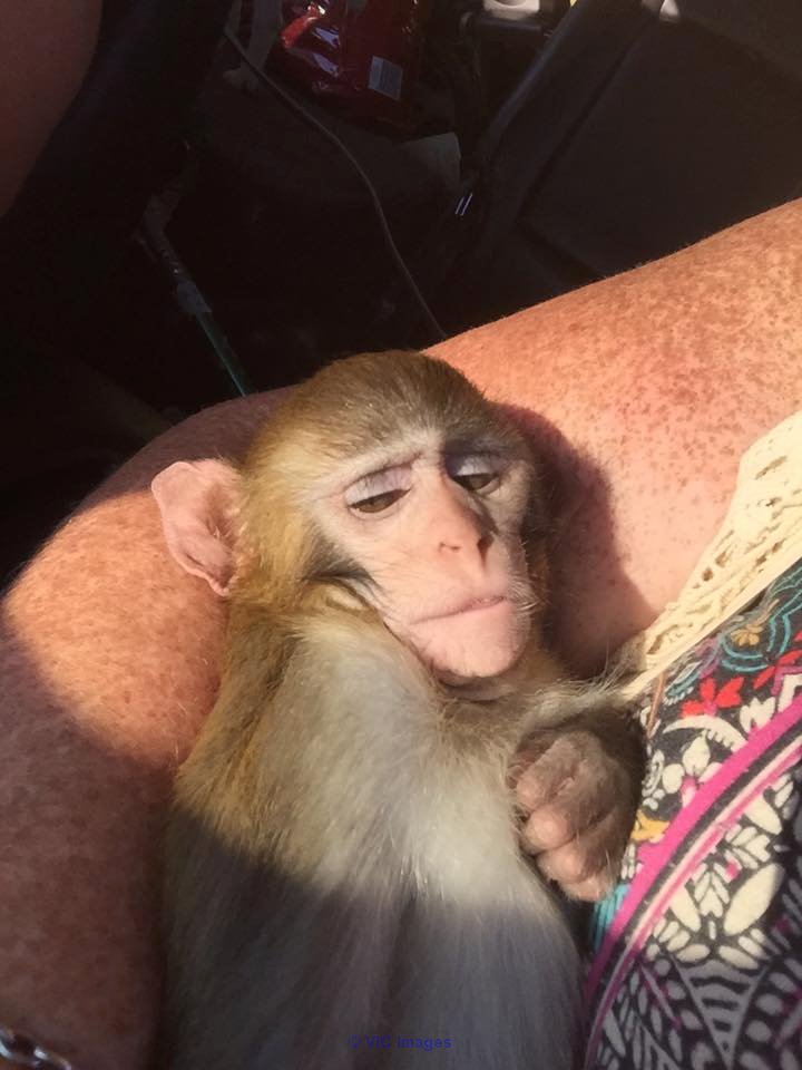 FRIENDLY BABY MONKEY FOR REHOMING calgary