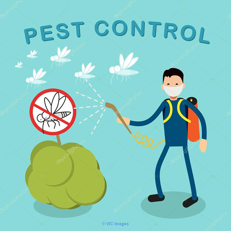 Pest Control Services for Home, Office and Company