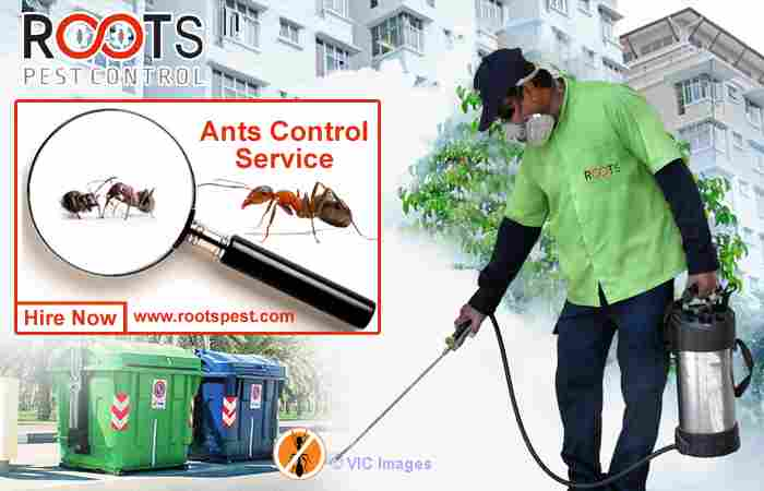 Ants Control Service - Pest Control Company