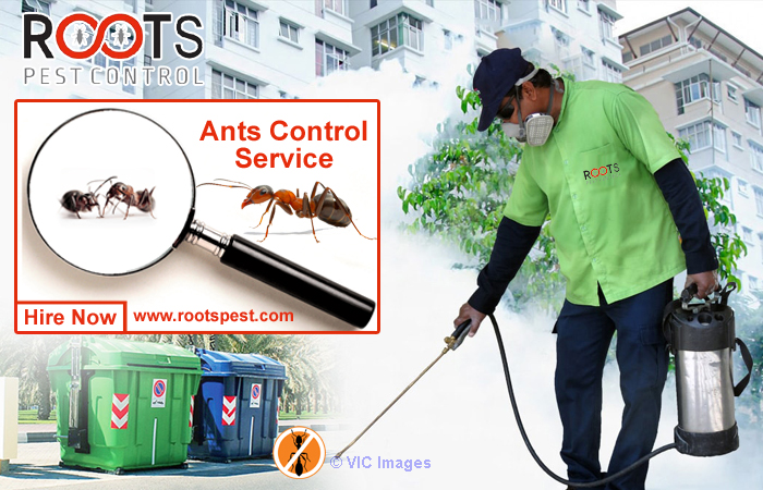 Ant Control and Extermination in Toronto | Roots Pest calgary