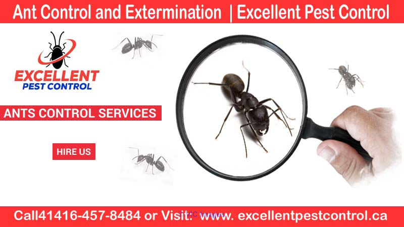 Ant Control and Extermination  | Excellent Pest Control     Calgary, Alberta, Canada Classifieds
