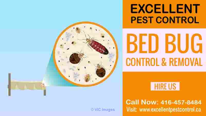 Bed Bug Extermination | Excellent Pest Control  Calgary, Alberta, Canada Classifieds