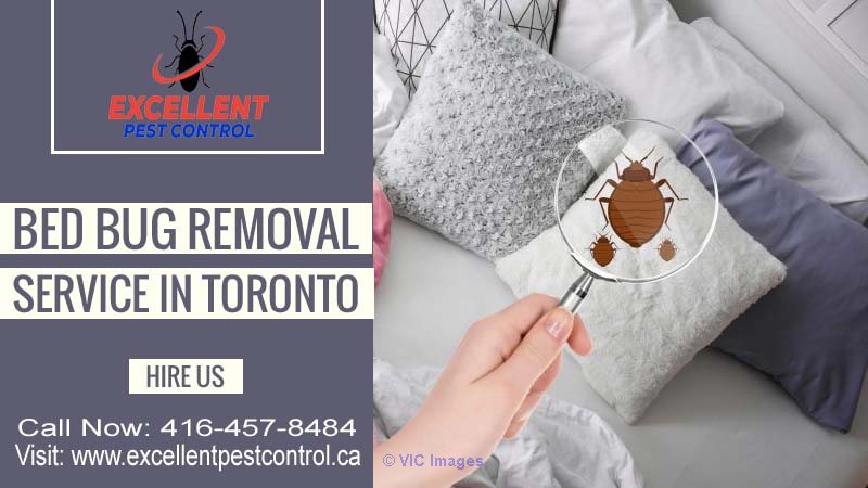 Bed Bug Extermination in Toronto | Excellent Pest Control    Calgary, Alberta, Canada Classifieds