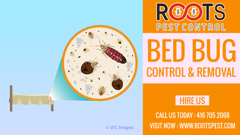 Bed Bug Extermination in Toronto | Excellent Pest Control calgary