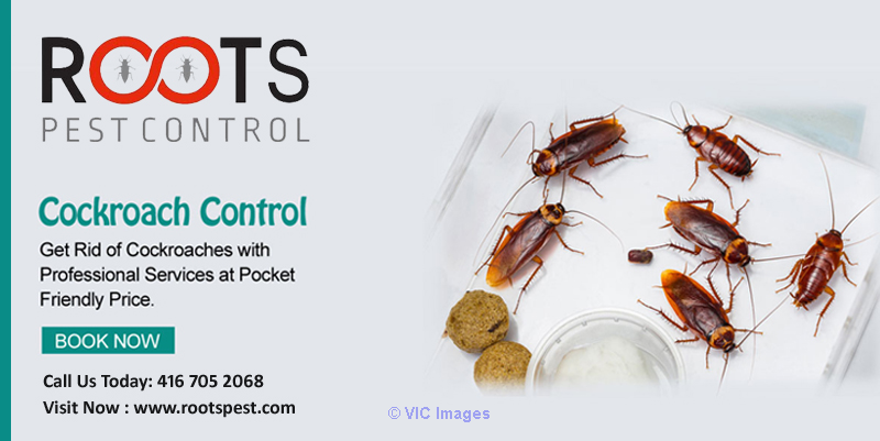 Cockroach Control and Extermination | Excellent Pest Control Calgary, Alberta, Canada Classifieds