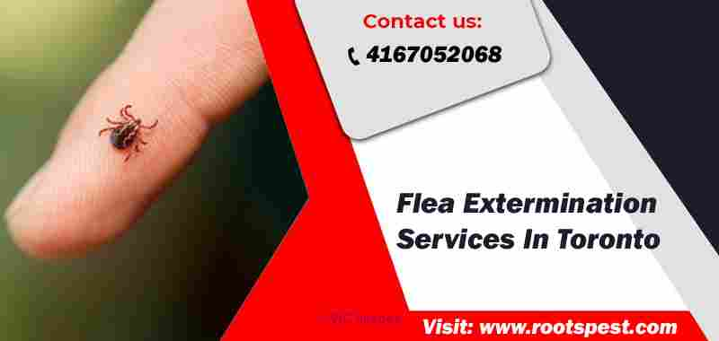 Best Flea Extermination In Toronto | Root Pest Control Calgary, Alberta, Canada Classifieds