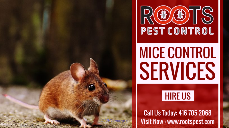 Mice and Rat Control | Roots Pest Control