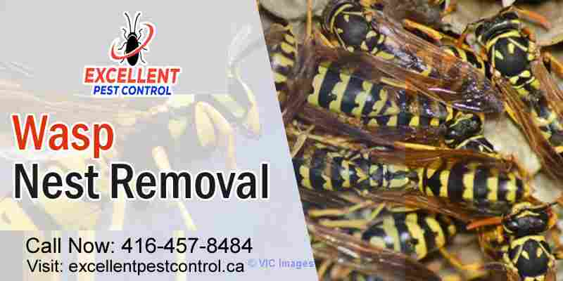 Wasp and Bee Control | Excellent Pest Control    Calgary, Alberta, Canada Classifieds