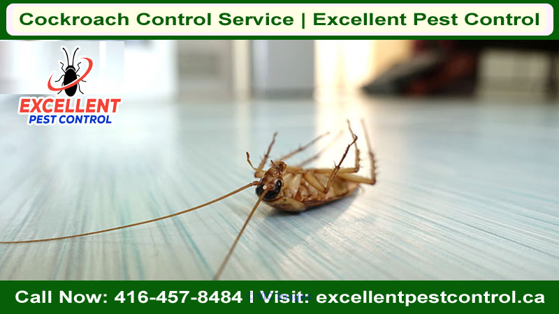 Cockroach Control Service | Excellent Pest Control    calgary