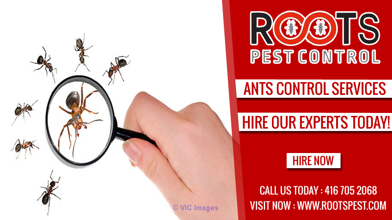 Ants Extermination Service Ontario | Roots Pest Control Calgary, Alberta, Canada Classifieds