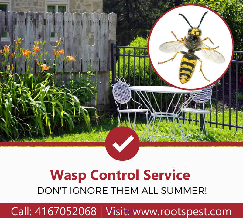 Wasp Control and Removal Service | Roots Pest Control calgary